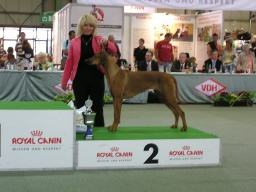 Carrie Ann res. BIG VI.skupina FCI