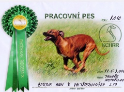 PRACOVNÍ PES ROKU 2010 / WORKING DOG OF THE YEAR 2010